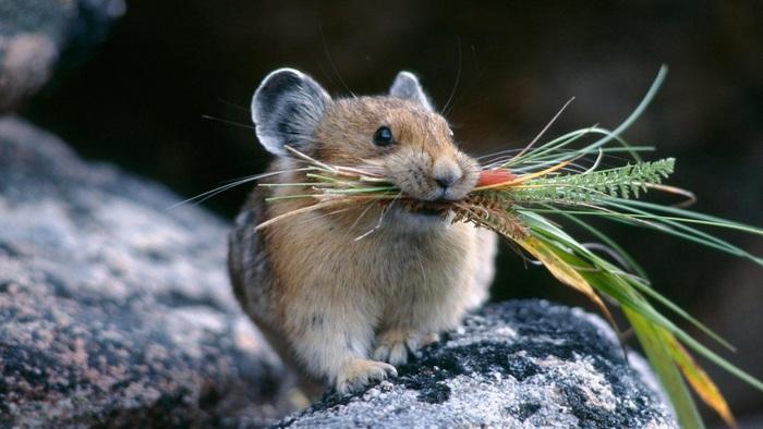 Những điều thú vị chúng ta ít biết về loài chuột - Ảnh 1.