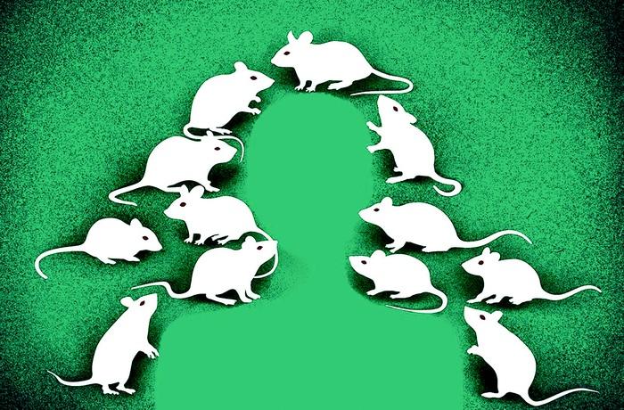 Những điều thú vị chúng ta ít biết về loài chuột - Ảnh 3.
