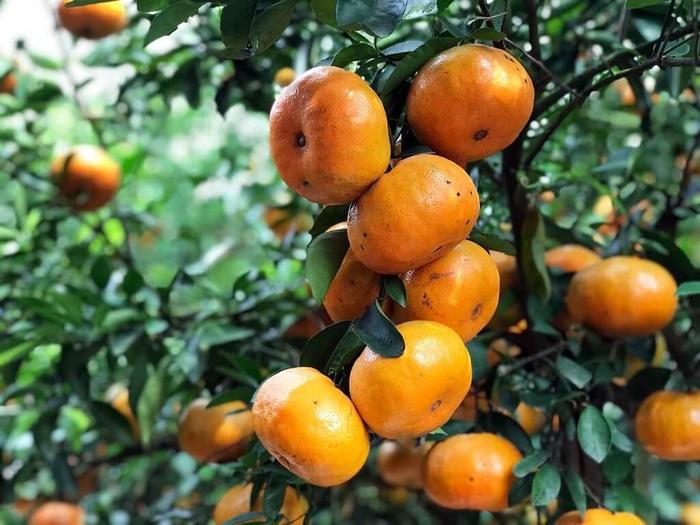 9 loại quả nên ăn trong mùa xuân - Ảnh 6.