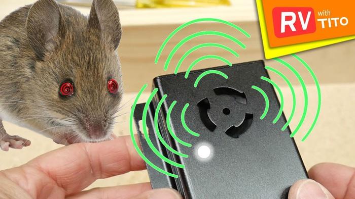 Chuột biến đổi gen có thể phát hiện chất nổ, dò mìn