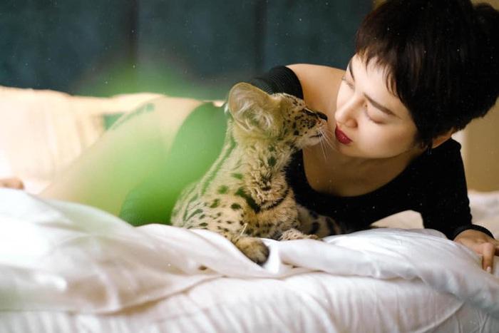 """Ca sĩ Bảo Anh cho biết, cô dành ngày Valentine để… ở bên thú cưng. Cô đăng ảnh chụp cùng chú mèo và cho biết: """"14/2 này hẹn hò với ai. Dạ xin thưa là với mèo""""."""