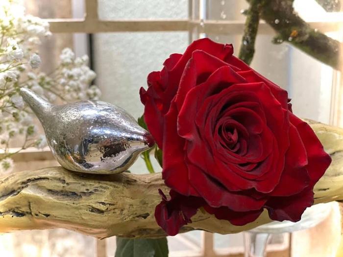Bạn chỉ cần chuẩn bị một bông hoa hồng nhung thật đẹp