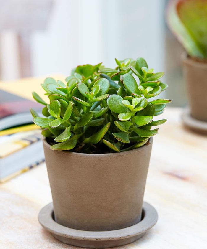 4 loại cây thực vật giúp hạn chế ô nhiễm không khí trong nhà  - Ảnh 5.