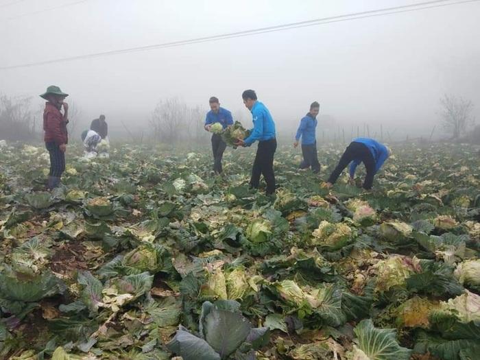Chị em Hà Nội chung tay giải cứu nông sản rớt giá do ảnh hưởng của virus Corona  - Ảnh 5.