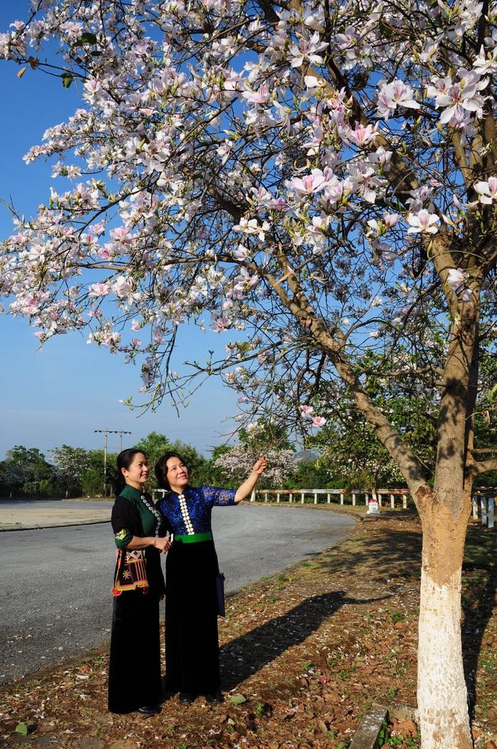 Lạc bước bởi nụ cười gái Thái và hoa ban trắng trời    - Ảnh 3.
