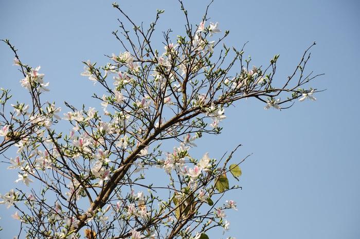 Lạc bước bởi nụ cười gái Thái và hoa ban trắng trời    - Ảnh 5.