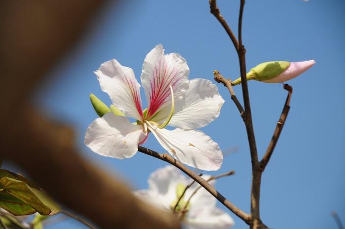 Lạc bước bởi nụ cười gái Thái và hoa ban trắng trời    - Ảnh 6.