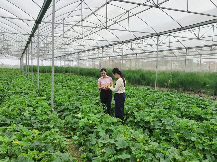 Khởi nghiệp từ nông nghiệp công nghệ cao - Ảnh 6.