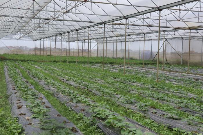 Khởi nghiệp từ nông nghiệp công nghệ cao - Ảnh 4.