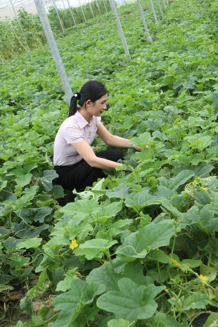 Khởi nghiệp từ nông nghiệp công nghệ cao - Ảnh 2.