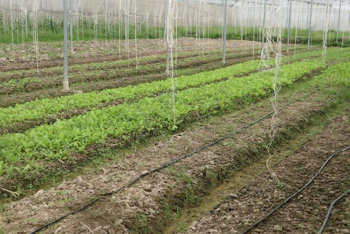 Khởi nghiệp từ nông nghiệp công nghệ cao - Ảnh 3.