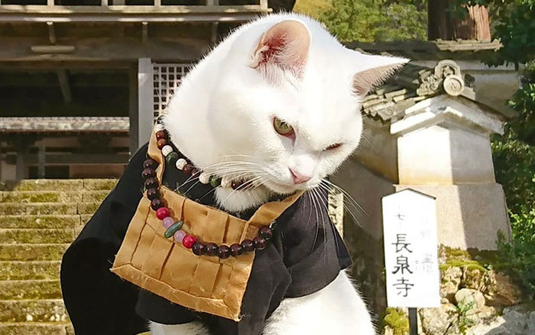 Nyan Nyan Ji, chùa Mèo nổi tiếng có một không hai ở Nhật Bản