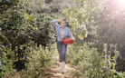 Bất ngờ với hình ảnh Lý Nhã Kỳ giản dị đi thu hoạch nông sản sạch