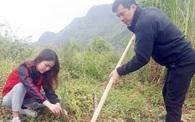 Trồng mới 1 triệu cây xanh khôi phục rừng đầu nguồn Mèo Vạc, Hà Giang