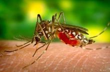 Việt Nam ghi nhận ca nhiễm Zika đầu tiên năm 2020, Bộ Y tế phát cảnh báo khẩn