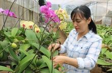 """""""Cú rẽ ngang"""" liều lĩnh từ nghề kế toán sang trồng hoa lan"""