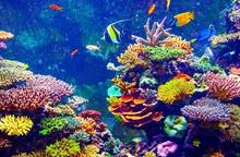 Hành động vì thiên nhiên để bảo vệ đa dạng sinh học