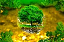 """Ngày Môi trường thế giới năm 2020: Nỗ lực lan tỏa """"hành động xanh"""""""