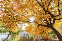 Thiên đường mùa thu ở thung lũng Hunza