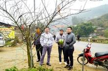 Lào Cai không có đào rừng, việc buôn bán khá sôi động