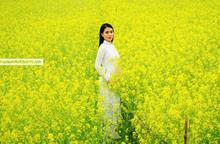 Vẻ đẹp tự nhiên cánh đồng hoa cải Chi Đông thành điểm check-in của thanh nữ Hà thành