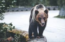 Thiếu nữ chiến đấu với gấu nâu để cứu chó cưng