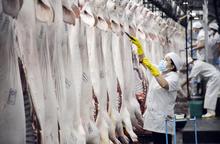 Vissan phát hiện 43 ca nhiễm Covid-19, có ảnh hưởng đến nguồn cung thịt heo cho TPHCM?