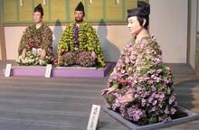 Thu về, người Nhật nôn nao nhớ lễ hội hoa cúc - loài hoa biểu tượng của thanh xuân bất tử