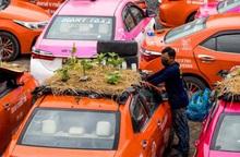 Thái Lan: Biến bãi xe taxi thành vườn rau giữa mùa dịch