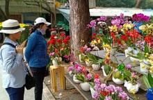 TPHCM: Thị trường hoa Tết trầm lắng, hoa đào ít người mua
