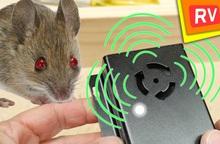 Những khả năng kỳ lạ của chuột biến đổi gen