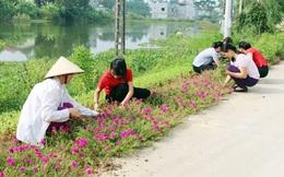 Hưng Yên: Hơn 100km đường hoa khoe sắc chào mừng 90 năm thành lập Hội