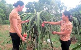 Phụ nữ Phú Thọ giúp gần 800 hộ thoát nghèo theo tiêu chí đa chiều