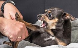 Bị chó nhà cắn, một người tử vong do bệnh dại, 2 người khác phải đi viện