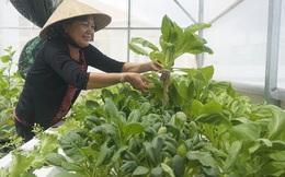 Long An: Ứng dụng công nghệ cao trong nông nghiệp góp phần xây dựng nông thôn mới
