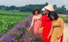 Vĩnh Phúc là một trong 9 tỉnh đầu tiên trong cả nước có 100% xã đạt chuẩn nông thôn mới