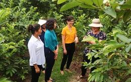 Hà Nội: Phụ nữ huyện Gia Lâm có nhiều cách làm hay giúp nhau phát triển kinh tế