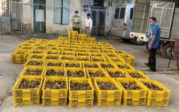 40.000 con gia cầm nhập lậu từ Trung Quốc vào Việt Nam đang trên đường tiêu thụ