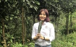 Giúp phụ nữ Lào Cai, Yên Bái làm giàu từ cây quế