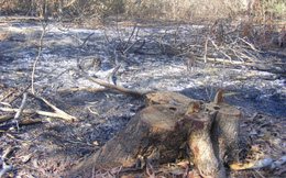 Đốn rừng làm du lịch ở Bình Thuận: Hiểm họa khôn lường khi rừng ngày càng cạn kiệt