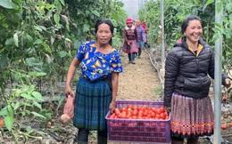 Nhiều phụ nữ lựa chọn sống xanh cùng Cô Cà chua