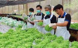 Đài Loan mở rộng ngành nghề tiếp nhận lao động nước ngoài