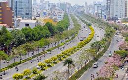 Chờ một vệt nắng Sài Gòn
