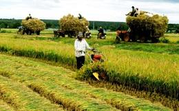 ĐBQH lo ngại tình trạng thu mua đất nông nghiệp chờ nhận giá đền bù, bỏ hoang đất