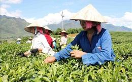 Phó Chủ tịch Hội LHPNVN Đỗ Thị Thu Thảo tham gia BCĐ Trung ương về giảm nghèo bền vững