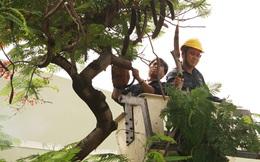 Chuyên gia cảnh báo việc chặt cây trong trường học
