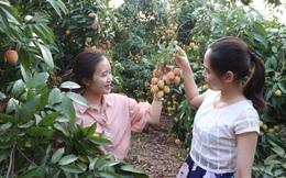 """Nở rộ tour du lịch """"giết sâu bọ"""" tại vườn trong dịp Tết Đoan Ngọ, giá chỉ từ 199k"""