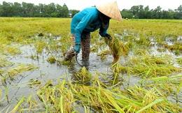 Cấp hơn 1.000 tấn hạt giống cho 2 tỉnh Sơn La, Thừa Thiên - Huế
