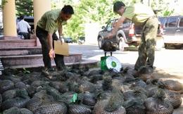 Cấm cán bộ, công chức, viên chức và người thân mua bán, tiêu thụ động vật hoang dã