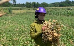 """Nắng nóng lịch sử, người dân miền Trung lao đao trong """"chảo lửa"""""""